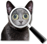 search cat image
